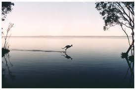 Elanda Point Kangaroo